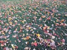 11-11-2016-leaves