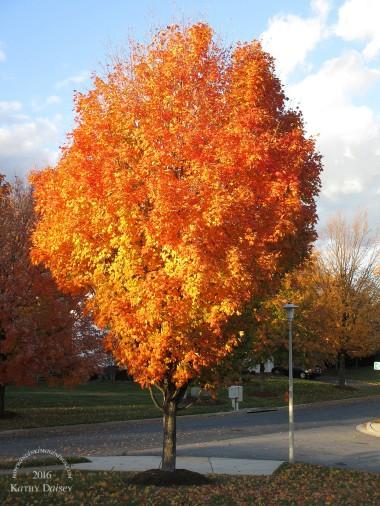 11-11-2016-sunlit-tree