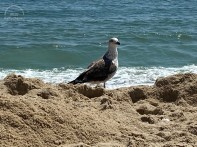 8 9 2020 seagull